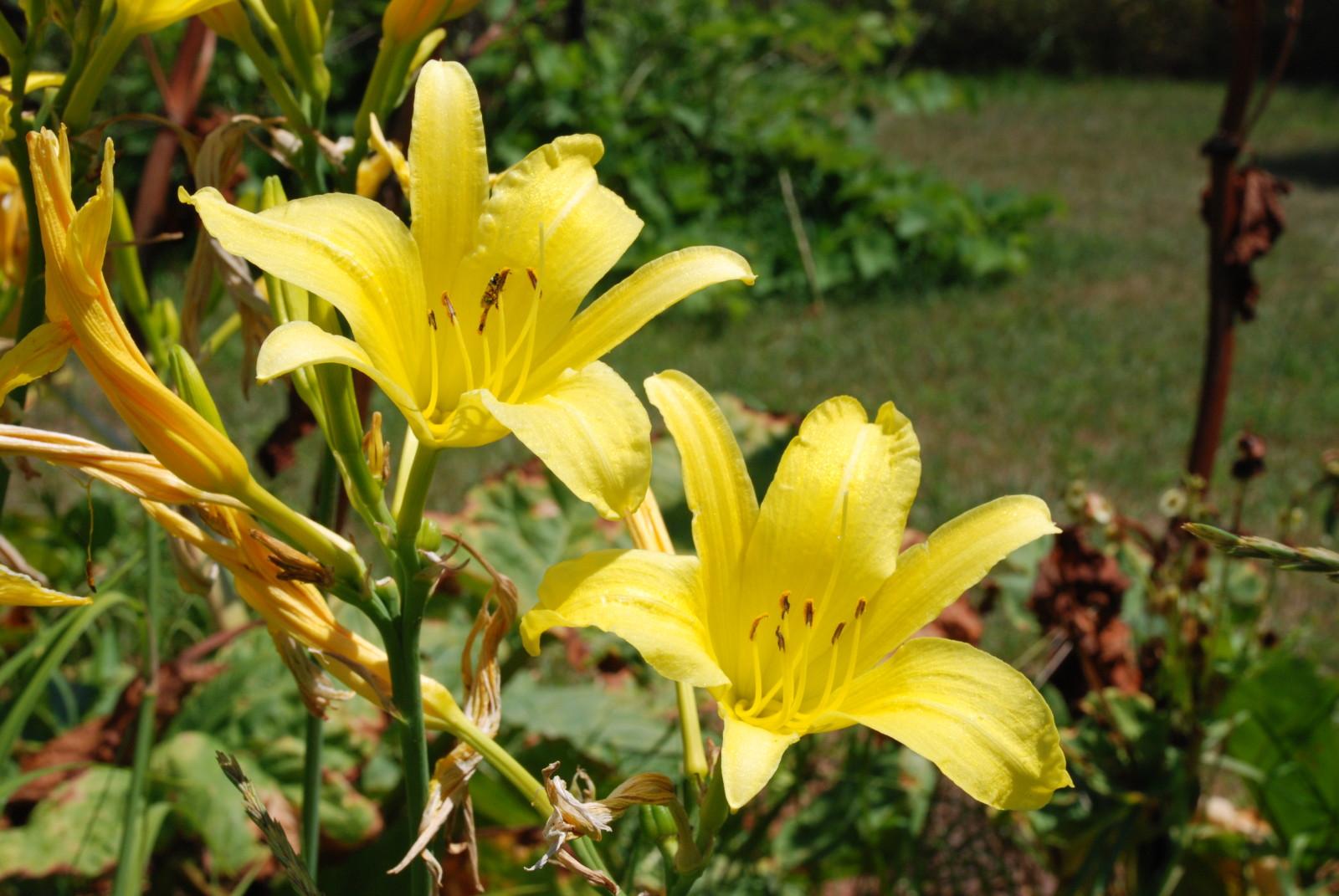 Consider the Lilies - original photograph